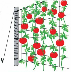 Plant Support Netting (Trellis)