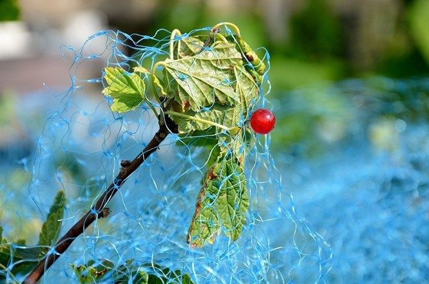 Bird netting is the best way to prevent birds from damaging crops